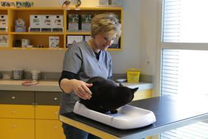 Salle de consultation vétérinaire Montville
