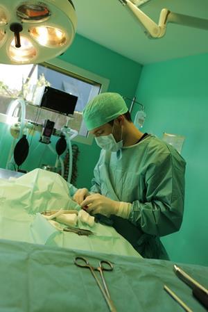 Chirurgie vétérinaire clinique de Bosc-le-Hard