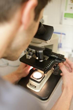 Analyses au microscope