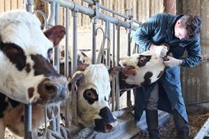 Soins des dents pour animaux d'élevage à Bosc-le-Hard